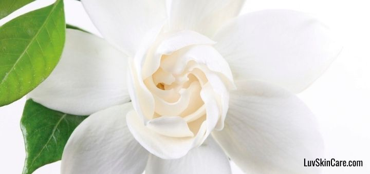 Benefits of Jasmine Extract for the Skin