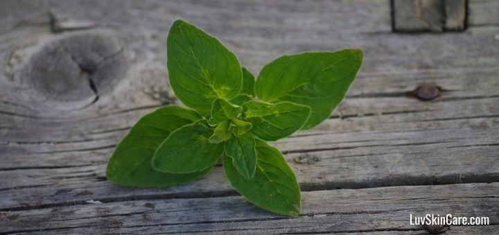 Does Oregano Oil Help with Acne?